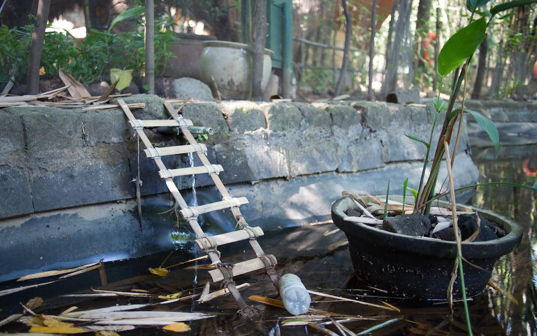 Bamboo to the Rescue … for Frogs