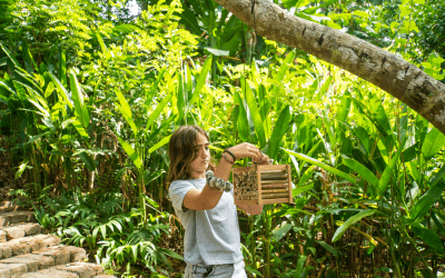 World Bee Day: Alma, our Primary School student, Builds Bamboo Bee Homes